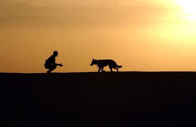 Koiran kouluttaminen